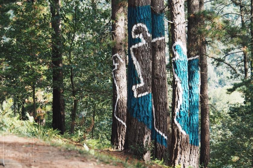 Bosque de Oma - Bosque Pintado - Bosque Encantado